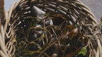 Découvrir les algues sur pieds  tebeo